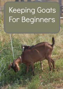 keeping goats for beginners
