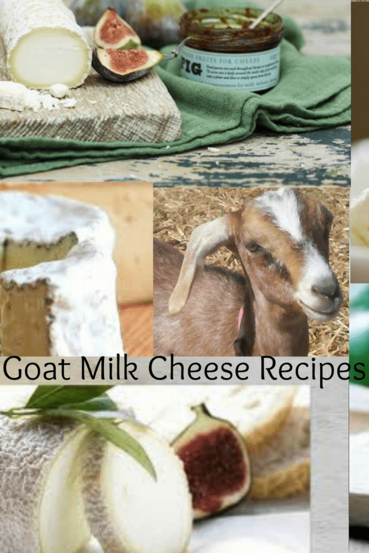 A variety of homemade goat milk cheese recipes that are easy and tasty