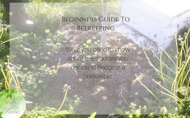 Beginners Guide To Keeping Bees – It Isn't As Scary As You Might Think